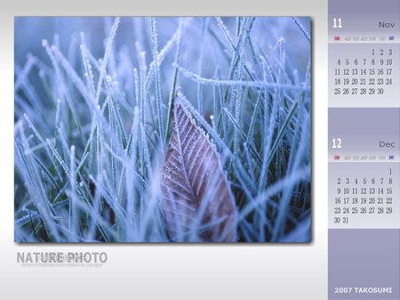2007年 11・12月のカレンダー壁紙 『霜草のベッド』