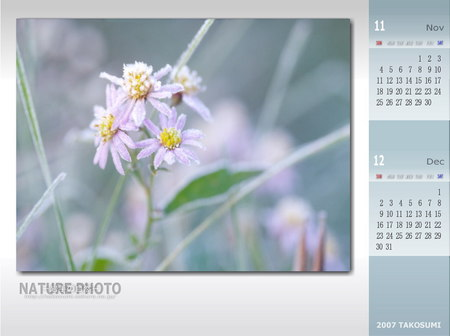 2007年11・12月のカレンダー壁紙 『霜化粧の花』