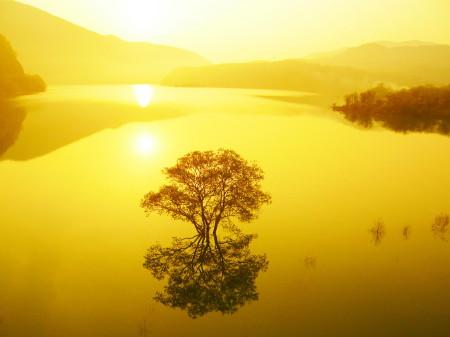 水没した樹木